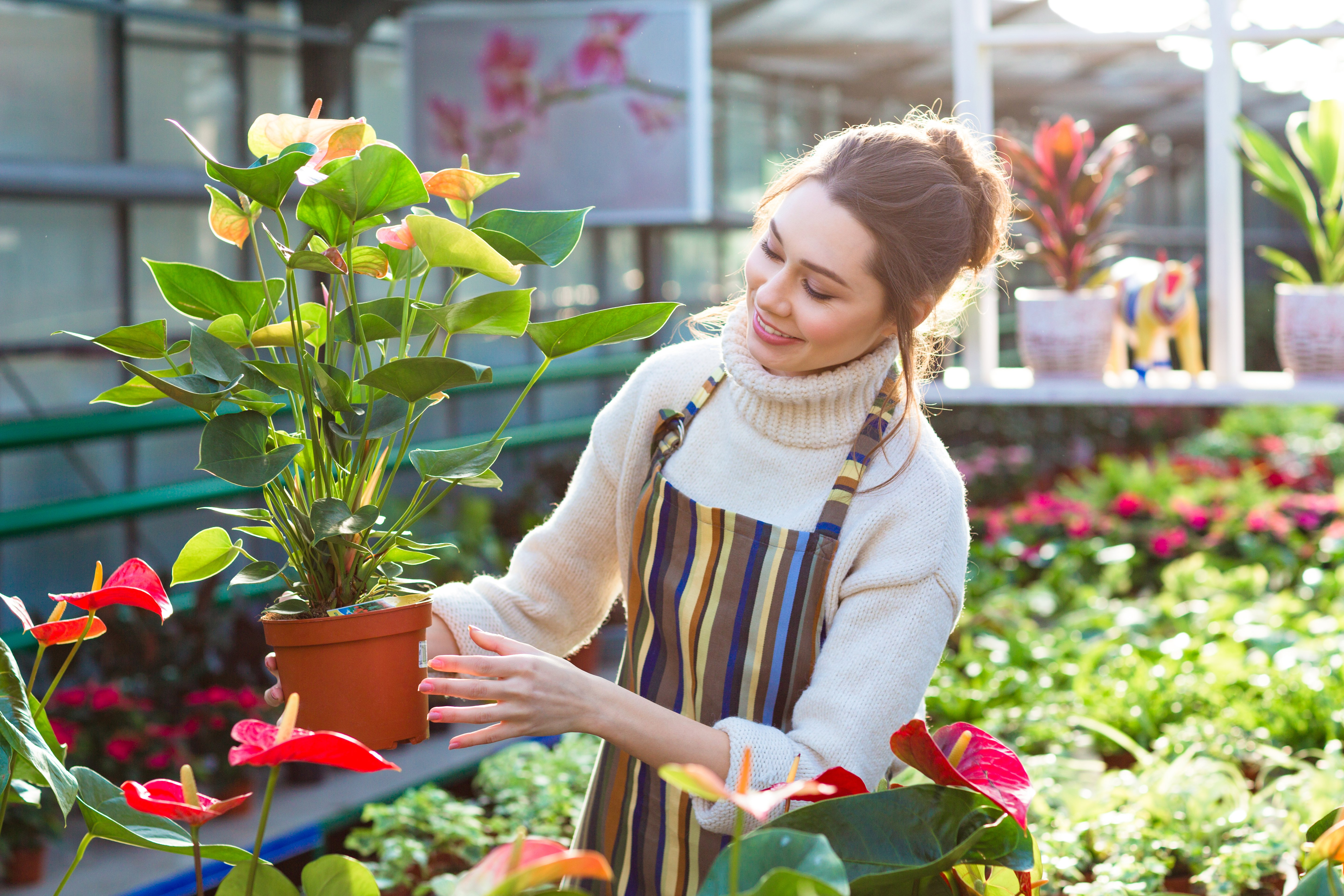 Lovely happy young woman gardener choosing flower pot with anthuriums